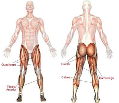 yoga for leg strength